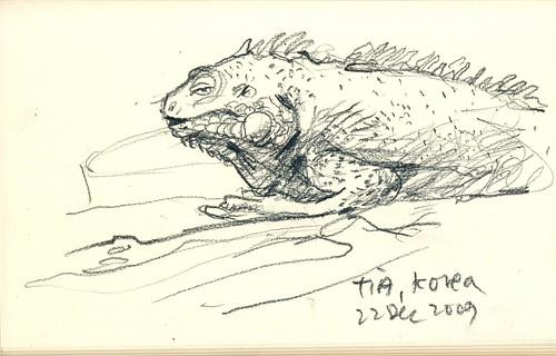 091222_iguana