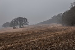 ltr-4641 (KazzT2012) Tags: canoneos70d chilterns landscape trees thechilterns