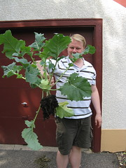 #195 - Matt & the Giant Kohlrabi