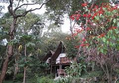 Budget Camping Safaris