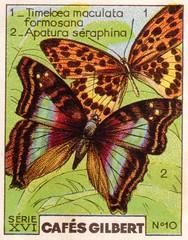 gilbertpapillons011