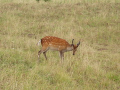Juli 09 058 (PercyGermany) Tags: nature tiere nice sweet wildlife natur percygermany