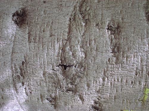 DesignM.ag Bark Texture - 8