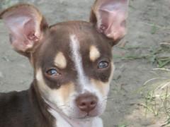 MOLLY (Gioser_Chivas) Tags: dog animal cafe can molly perro mascota mamifero gioser natureselegantshots