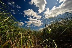 [フリー画像] [自然風景] [草原の風景] [雲の風景]        [フリー素材]