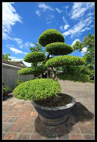 Extreme Gardening - Imperial Citadel - Hué - Vietnam