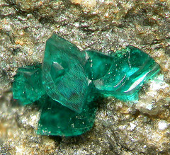 Ramsbeckite crystals (MuseumWales) Tags: colour green nature museum wales store aqua natural display crystal exhibition national collections online mineral vault gem specimen lustre gemstone mineralogy
