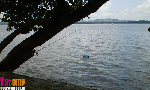 Feeling too lazy to fish? Stick the rod in a tree and wait