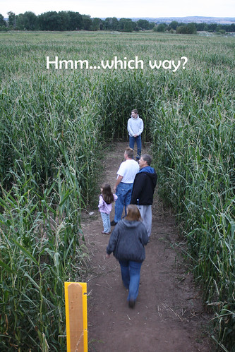 corn maze - from bridge