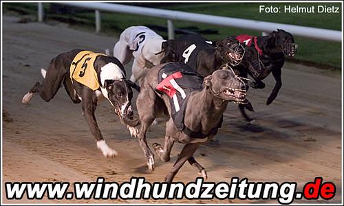 Greyhound: Westmead Grant