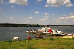 border crossing (Abra K.) Tags: horses river journey romania danube bordercrossing ferryboat borderriver summerdream2009