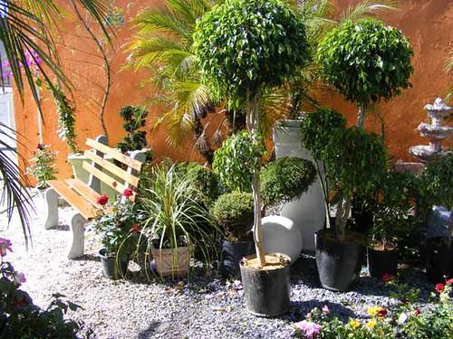 fotos de plantas ornamentais