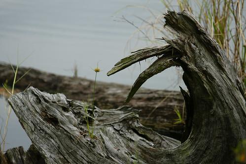 朽木不可雕也。龍也。