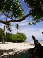 Guadalupa: spiaggia di Bois Jolan- Sainte Anne