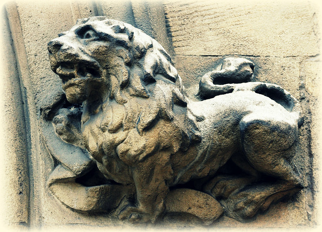 Lion in Cambridge