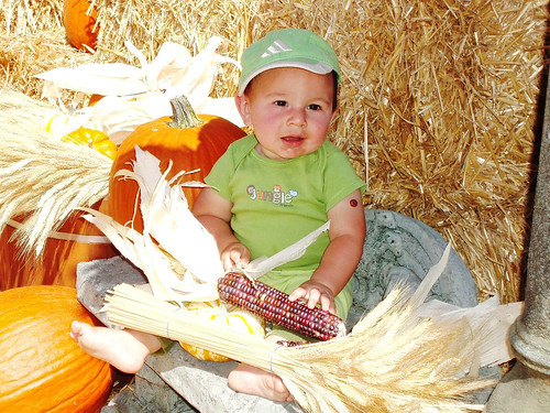 child in pumpkin patch with indian corn and hay