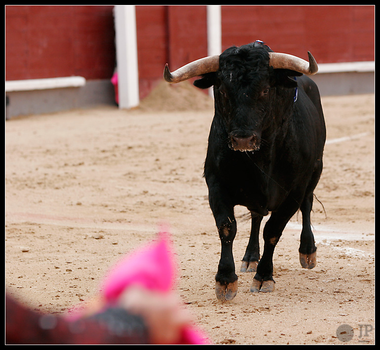 toro-de-palha-2