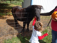 Lilliann Petting A Horse