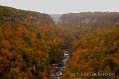 Little River Canyon (the waterfallhunter) Tags: autumn fall water river littlerivercanyon lookoutmountain dekalbcounty cherokeecounty nikon50 fortpaynealabama littlerivernationalpreserve loriwalden wolfcreekoverlook