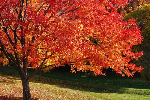 Foliage 2009.