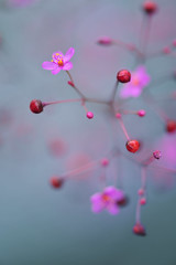 Little Things (*Sakura*) Tags: pink red flower macro nature japan