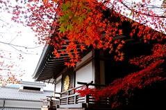 Near Sanzen-in Temple, Ohara