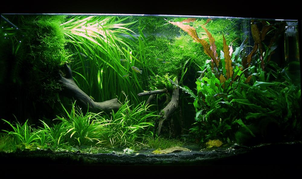 Meine 3 Glaskasten 125l 60l 20l Aquarienvorstellungen
