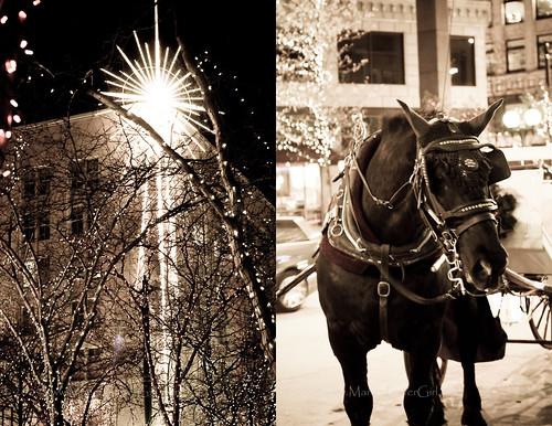 macy's star & horse