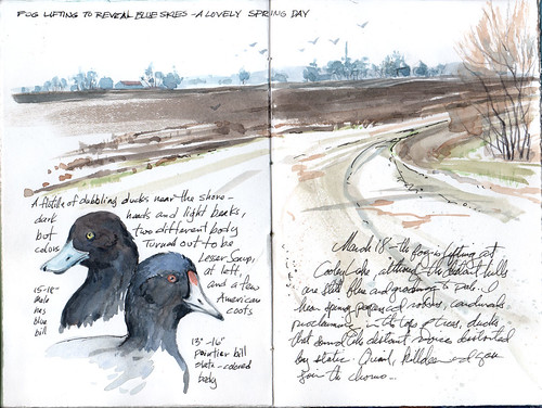waterfowl--yesterday's sketchtrip