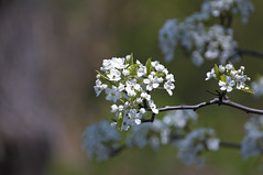 Flower (Xanis_WFN) Tags: spring bokeh pentaxkx pentaxsmcpda35mmf28