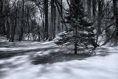 S'Know Your Way (zuni48) Tags: trees winter blackandwhite snow monochrome landscape shadows maryland snowcovered explored oregonridgepark infinitexposure zunikoff