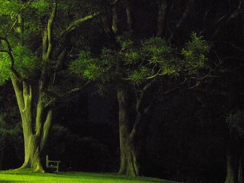 jul 08 09_tree 151