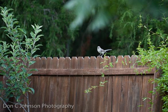 BackyardBlog-105