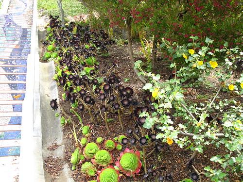 Moraga Steps landscaping
