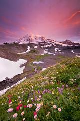 Mount Rainier 2008 (Jesse Estes) Tags: paradise mountrainier wildflowers jesseestesphotography