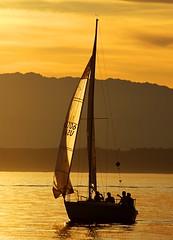 Navigator (JTContinental) Tags: seattle trees sunset sky urban orange mountains water silhouette sailboat boat goldengardens bigmomma cy2 challengeyouwinner jtcontinental thepinnaclehof projectgreenspace tphofweek97