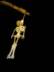 Pendu (PhotobyVéro) Tags: night skeleton mort os human morbid bone nuit hung died squelette humain morbide pendu