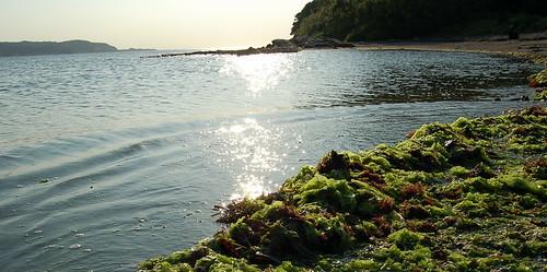 うちあげられた海草