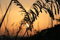 Through the Grass (EricRW) Tags: sunset sun storm bird beach rain clouds fire rainbow thunderstorm lightning