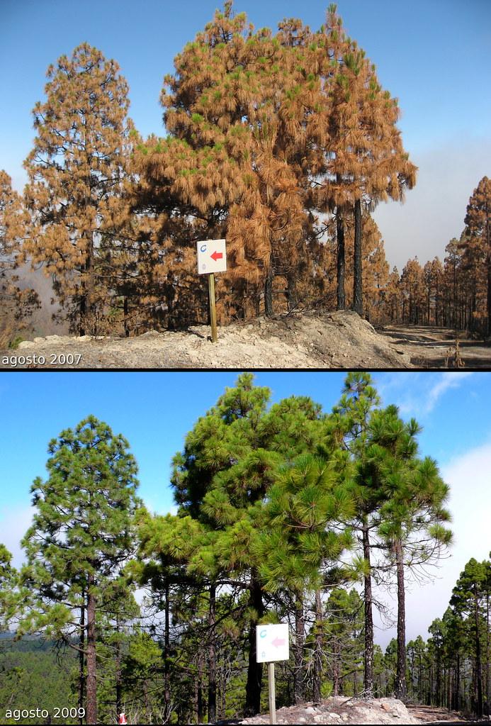 Incendios Forestales 3874430616_c8e6a86d42_b