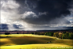 the light before the storm, part II (Daniel Murray (southnz)) Tags: road shadow newzealand cloud sun storm tree green field rain forest dark landscape shower pond scenery hill pasture nz southisland burst paddock ight southnz