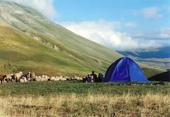 Tenda a Capanna Ghezzi(pecore incluse) (pandellescimmie) Tags: scout tenda pecore castelluccio gregge castellucciodinorcia capannaghezzi