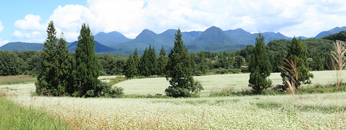 Buckwheat Flowers panorama / 蕎麦畑(そばばたけ)[13190 x 4988 = 65.8MP]