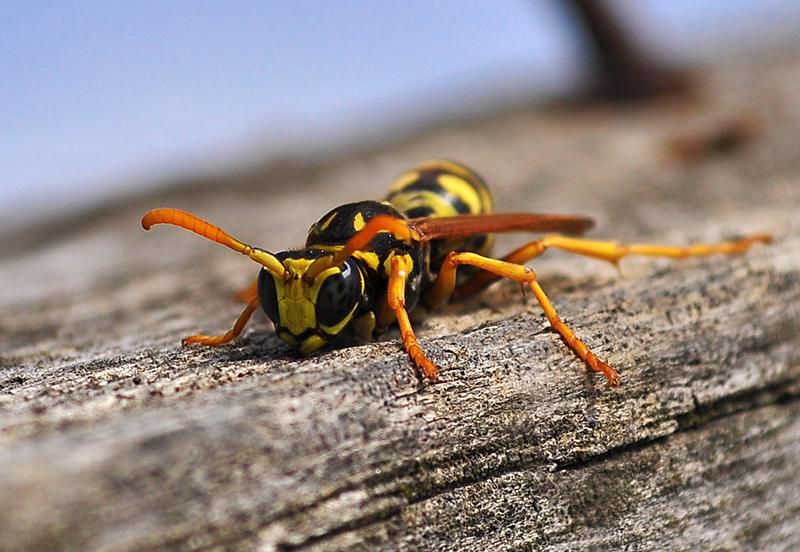 wasp & nails 2