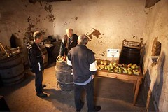 Exhibition of Traditional Cider Apples