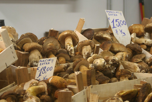 Porcini in Florence_123