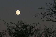 IMG_9784 (simon_travelboy) Tags: arizona tucson saguaronationalpark