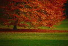 Autumn is a Red Caress o