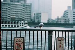 Untitled (Michio Endo) Tags: nikon f6 centuria100 aiafnikkor85mmf18d