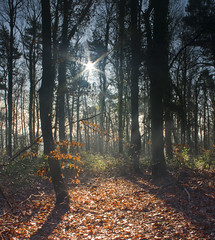 Sun through the trees (Rich3591) Tags: trees woods hampshire forestofbere challengeyouwinner justpentax pentaxk20d yourwonderland